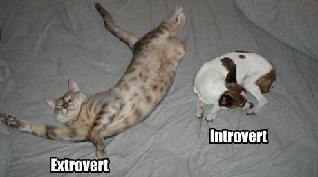 Chovejte se jako extrovert, budete šťastnější